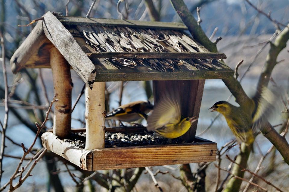 karmnik dla ptakow
