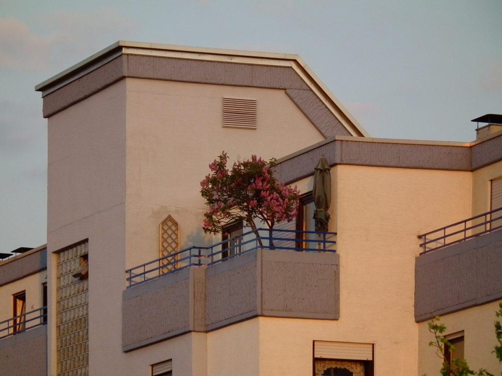 krzewy na balkonie