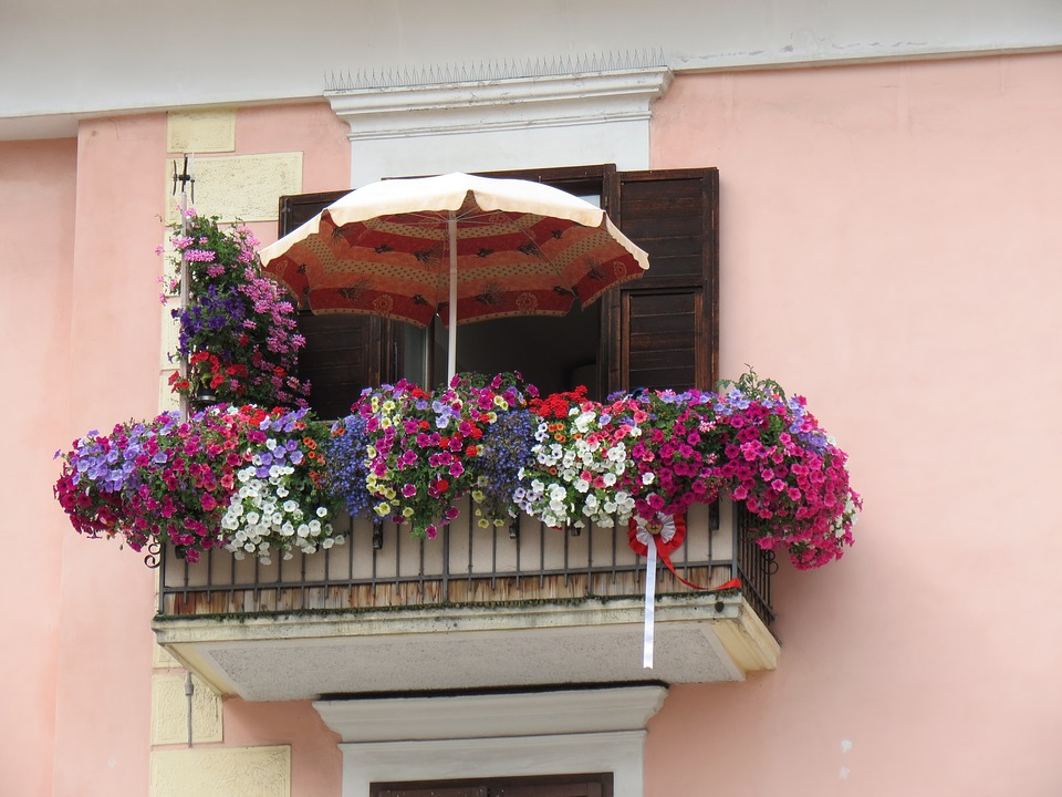 kwiaty na balkonie