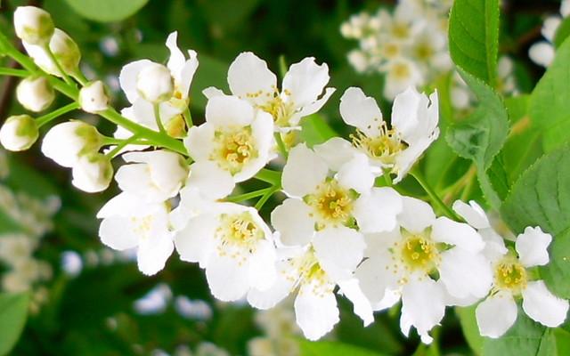 pachnace kwiaty